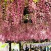 Ngắm sắc hoa tử đằng tại công viên Wake ở Kirishima -2019